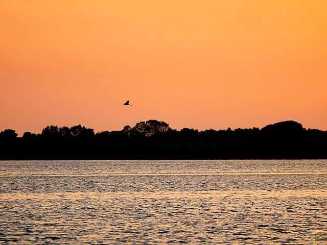 Riserva naturale Laguna di Orbetello di Ponente - Foto di Andrea Neri [Licenza CC-BY-SA 3.0]