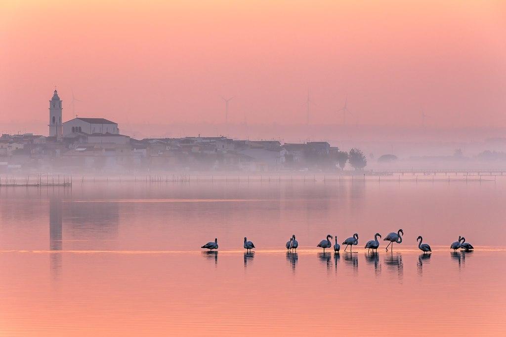 Tutto rosa – di Alberto Busini